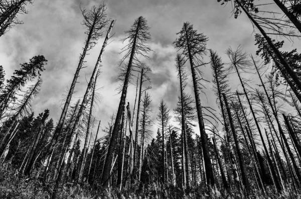 Forest Fire Photograph - Burned Forest by Pelo Blanco Photo