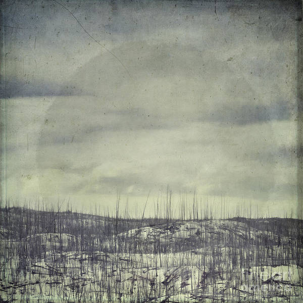 Wall Art - Photograph - Burned Ground by Priska Wettstein