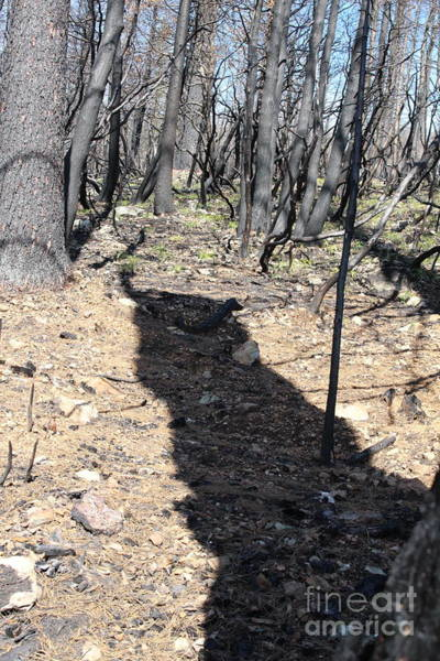 Photograph - Burned Out Forest Monster by Marie Neder