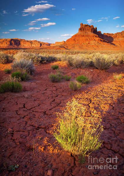 Southwest Usa Photograph - Burning Bush by Inge Johnsson