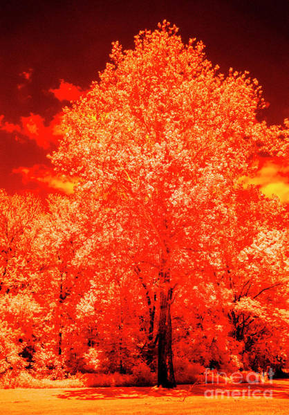 Photograph - Burning Bush by Paul W Faust - Impressions of Light