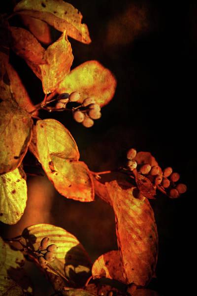 Photograph - Burnt Autumn Berries 6043 H_3 by Steven Ward