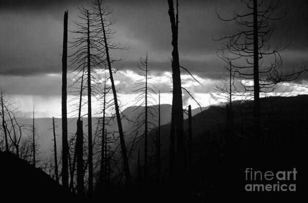 Photograph - Burnt Forest - Yosemite by Charmian Vistaunet