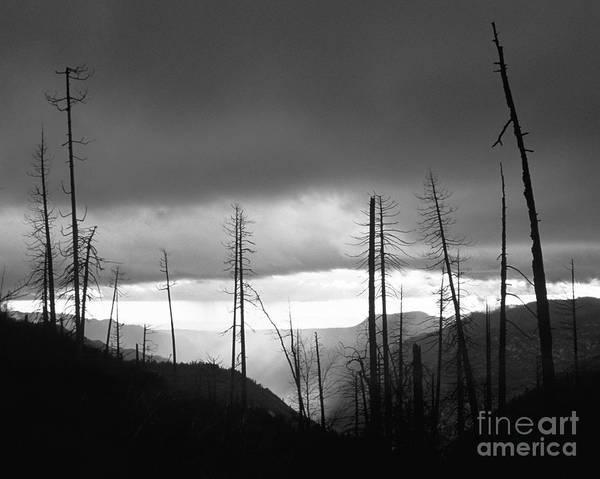 Photograph - Burnt Forest II - Yosemite by Charmian Vistaunet