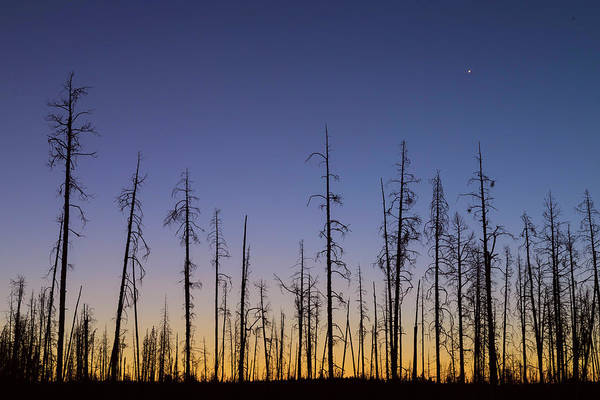 Photograph - Burnt Forest by James BO Insogna