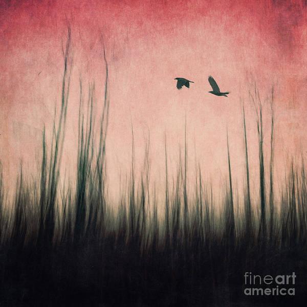 Corvidae Photograph - Burnt Ground by Priska Wettstein