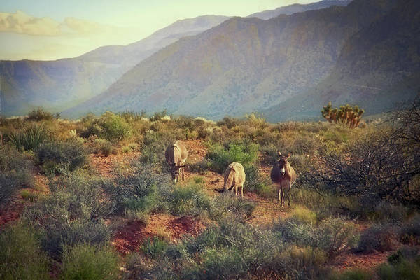 Photograph - Burros At Bonnie Springs Ranch, Las Vegas by Tatiana Travelways
