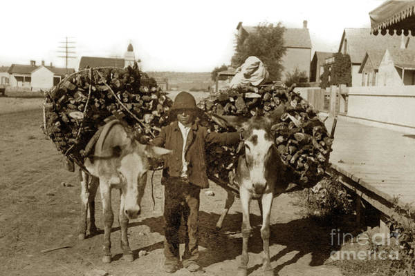 Photograph - Burros Packing Fire Wood New Mexico 1885 by California Views Archives Mr Pat Hathaway Archives