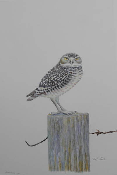 Burrowing Owl Painting - Burrowing Owl by Alan Suliber