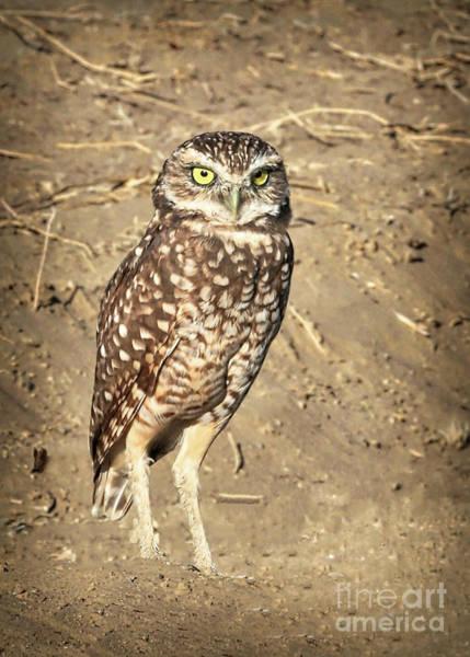Wall Art - Photograph - Burrowing Owl Beauty by Carol Groenen
