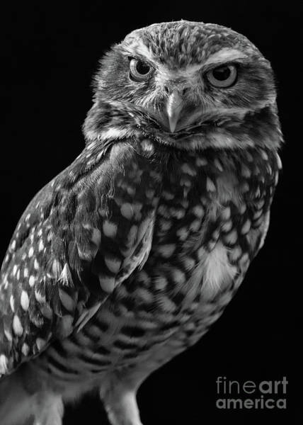 Photograph - Burrowing Owl by Chris Scroggins