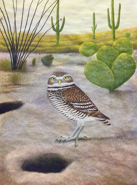 Burrowing Owl Painting - Burrowing Owl In The Desert by Alan Suliber