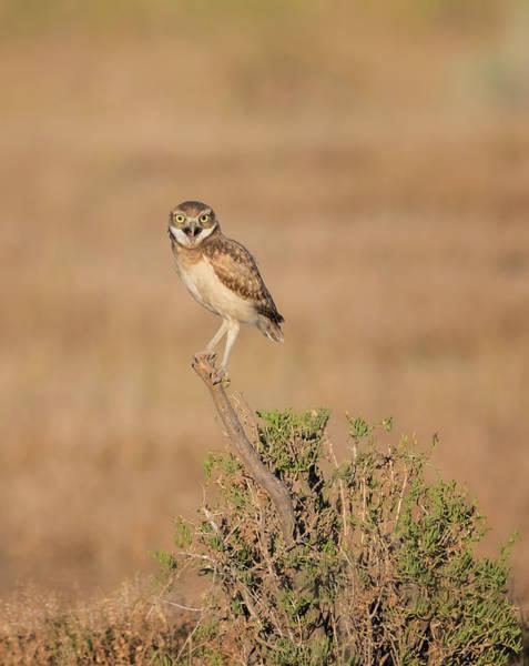 Photograph - Burrowing Owl Joy by Loree Johnson