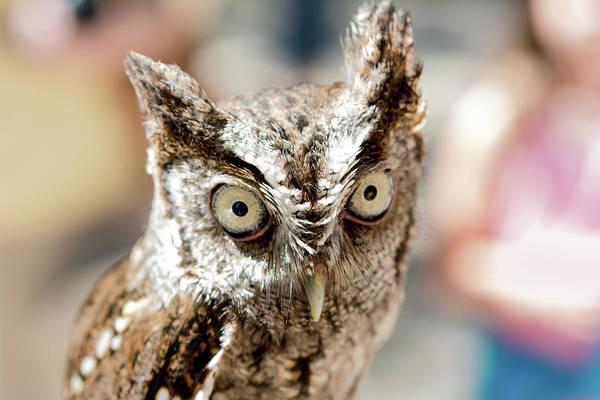 Digital Art - Burrowing Owl Portrait by Gene Norris