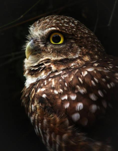 Photograph - Burrowing Owl Protrait by Elaine Malott