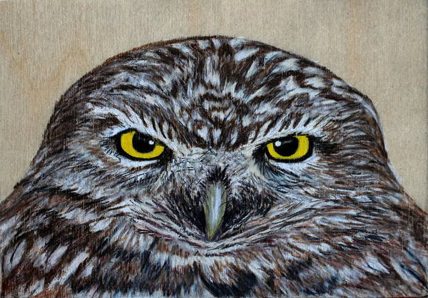 Burrowing Owl Painting - Burrowing Owl by Sarah McCord