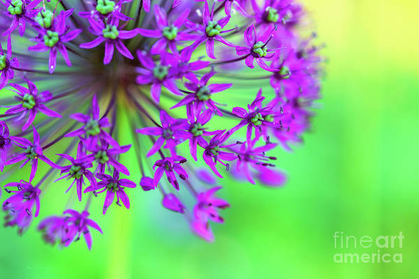 Photograph - Burst by Beve Brown-Clark Photography