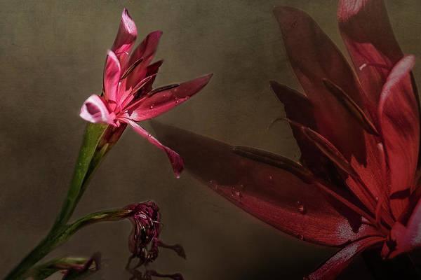 Photograph - Bush Lily by Belinda Greb