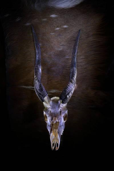 Photograph - Bushbuck by David Andersen