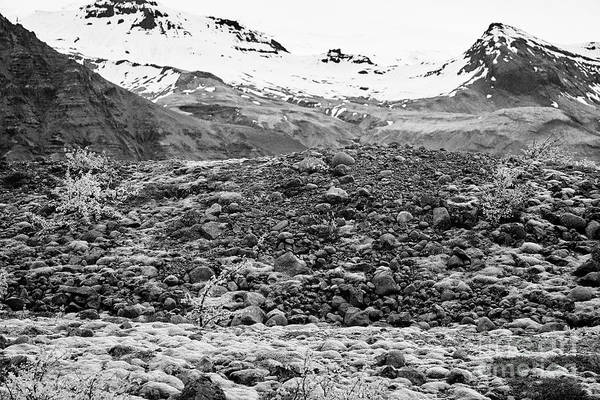 Wall Art - Photograph - bushes and mosses growing on Skaftafell glacier end moraine Vatnajokull national park in Iceland by Joe Fox