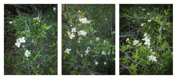Photograph - Bushrue Flower Collage by Alexander Kunz