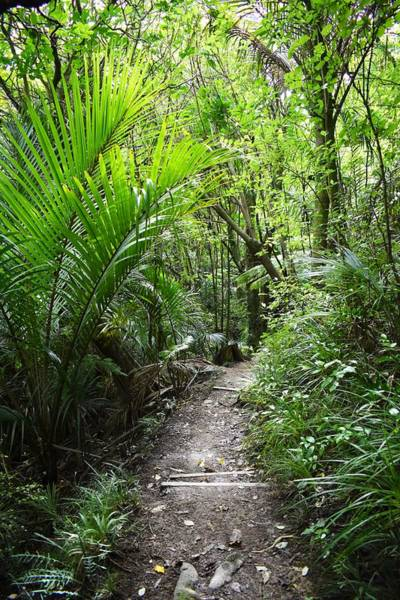 Photograph - Bushwalk In Kapiti by Abby Wendy