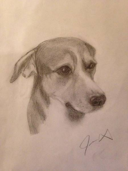 Mutt Drawing - Buster by Jamey Wright