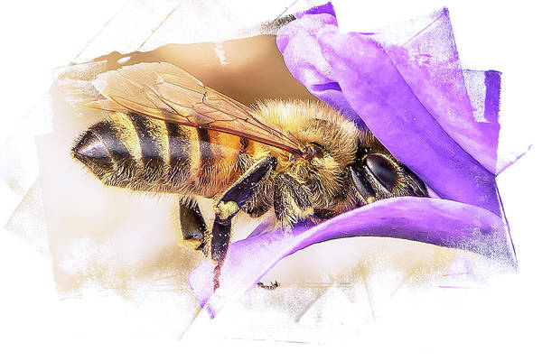 Photograph - Busy As A Bee by Jennifer Grossnickle