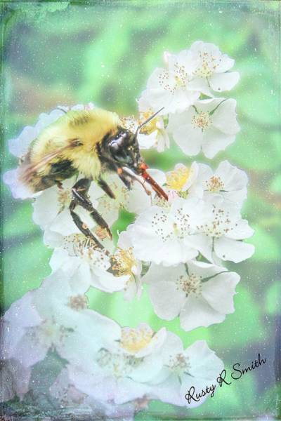 Digital Art - Busy Bee On Blackberry Blossoms. by Rusty R Smith