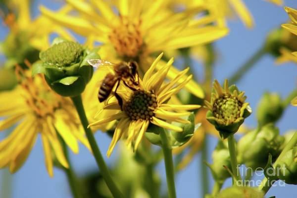 Photograph - Busy Bee by The Art of Alice Terrill