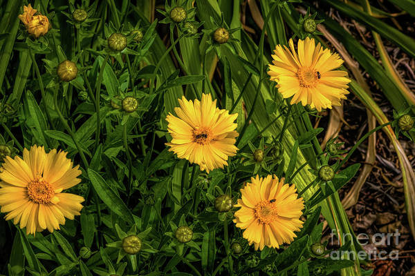 Photograph - Busy Bees by Jon Burch Photography