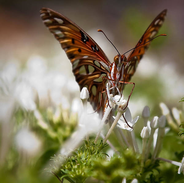 Wall Art - Photograph - Busy Butterfly by Patrick  Flynn