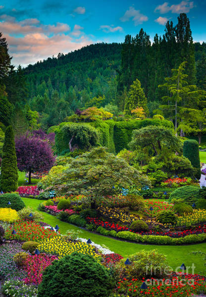 British Columbia Photograph - Butchart Gardens Sunset by Inge Johnsson