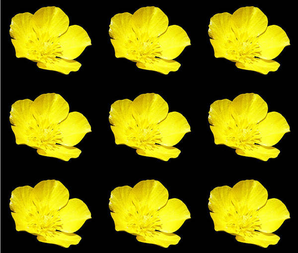 Photograph - Buttercups Go Mod by Denise Beverly