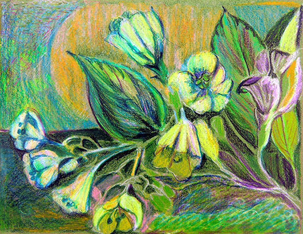Lily Drawing - Buttercups by Mindy Newman