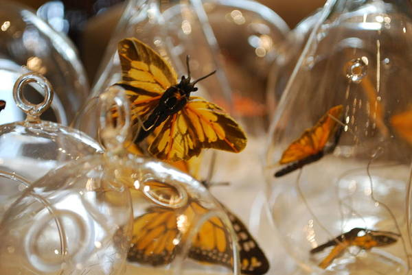 Photograph - Butterflies And Glass II by Emily Page