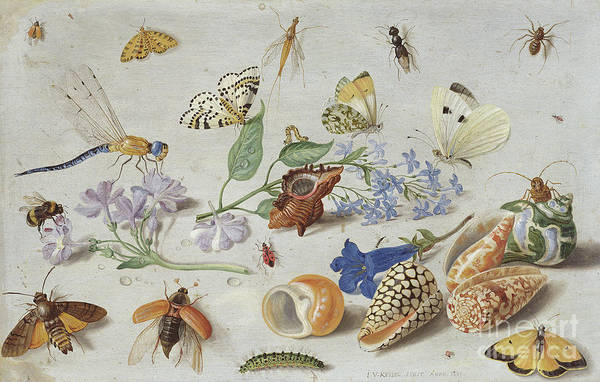 Wall Art - Painting - Butterflies And Other Insects, 1661 by Jan Van Kessel