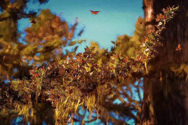 Photograph - Butterflies Are Free by Susan Rissi Tregoning