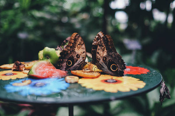 Wall Art - Photograph - Butterflies, Flowers, Fruits by Happy Home Artistry