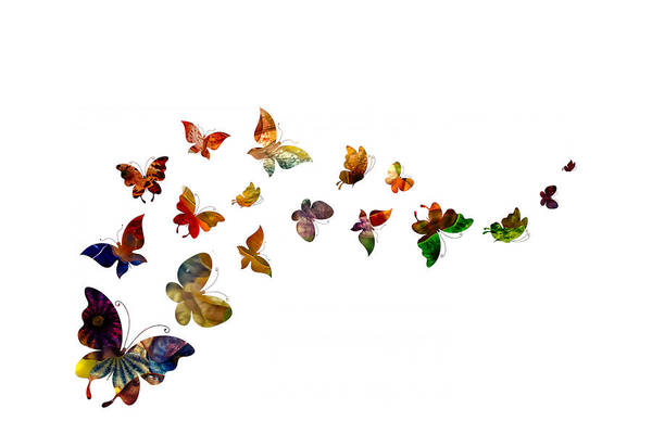 Photograph - Butterflies by Michael Colgate