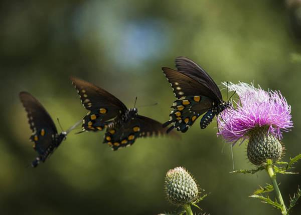 Photograph - Butterflies On Parade by Robert Potts