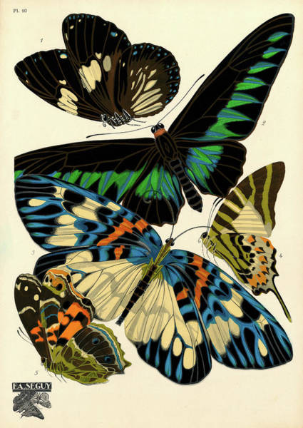 Wall Art - Painting - Butterflies, Plate-10 by Painter of the 19th century