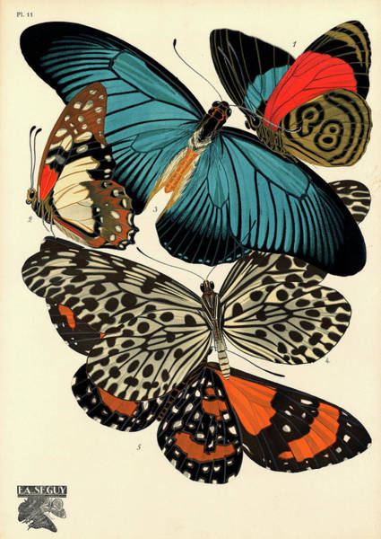 Wall Art - Painting - Butterflies, Plate-11 by Painter of the 19th century
