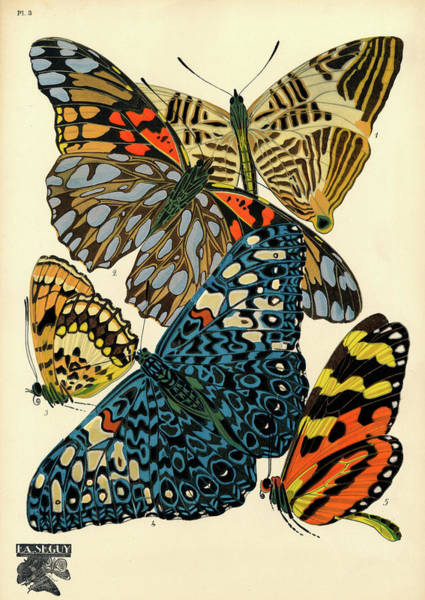 Wall Art - Painting - Butterflies, Plate-3  by Painter of the 19th century