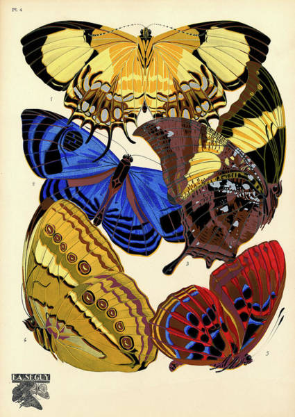 Wall Art - Painting - Butterflies, Plate-4  by Painter of the 19th century