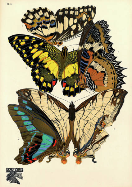 Wall Art - Painting - Butterflies, Plate-9  by Painter of the 19th century