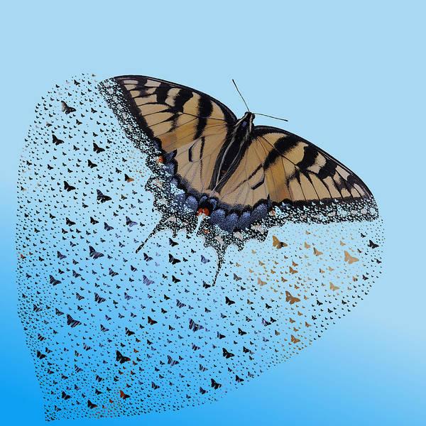 Photograph - Butterflies by Richard Reeve