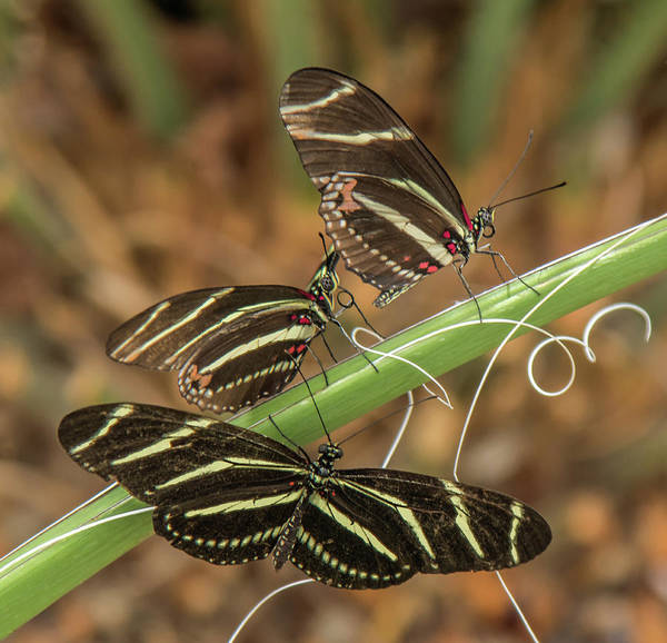 Photograph - Butterflies  by Tam Ryan