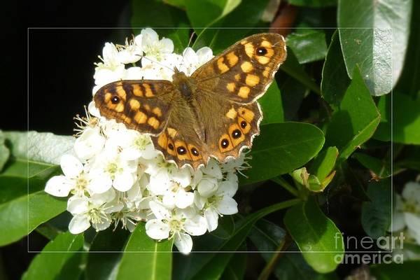 Photograph - Butterfly 1 by Jean Bernard Roussilhe