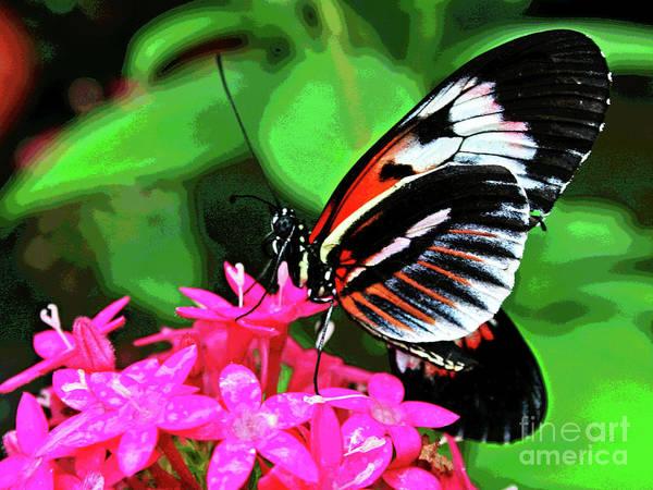 Photograph - Butterfly 1 by Larry Oskin